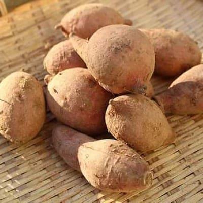 [生]安納芋(無農薬) 3キロ