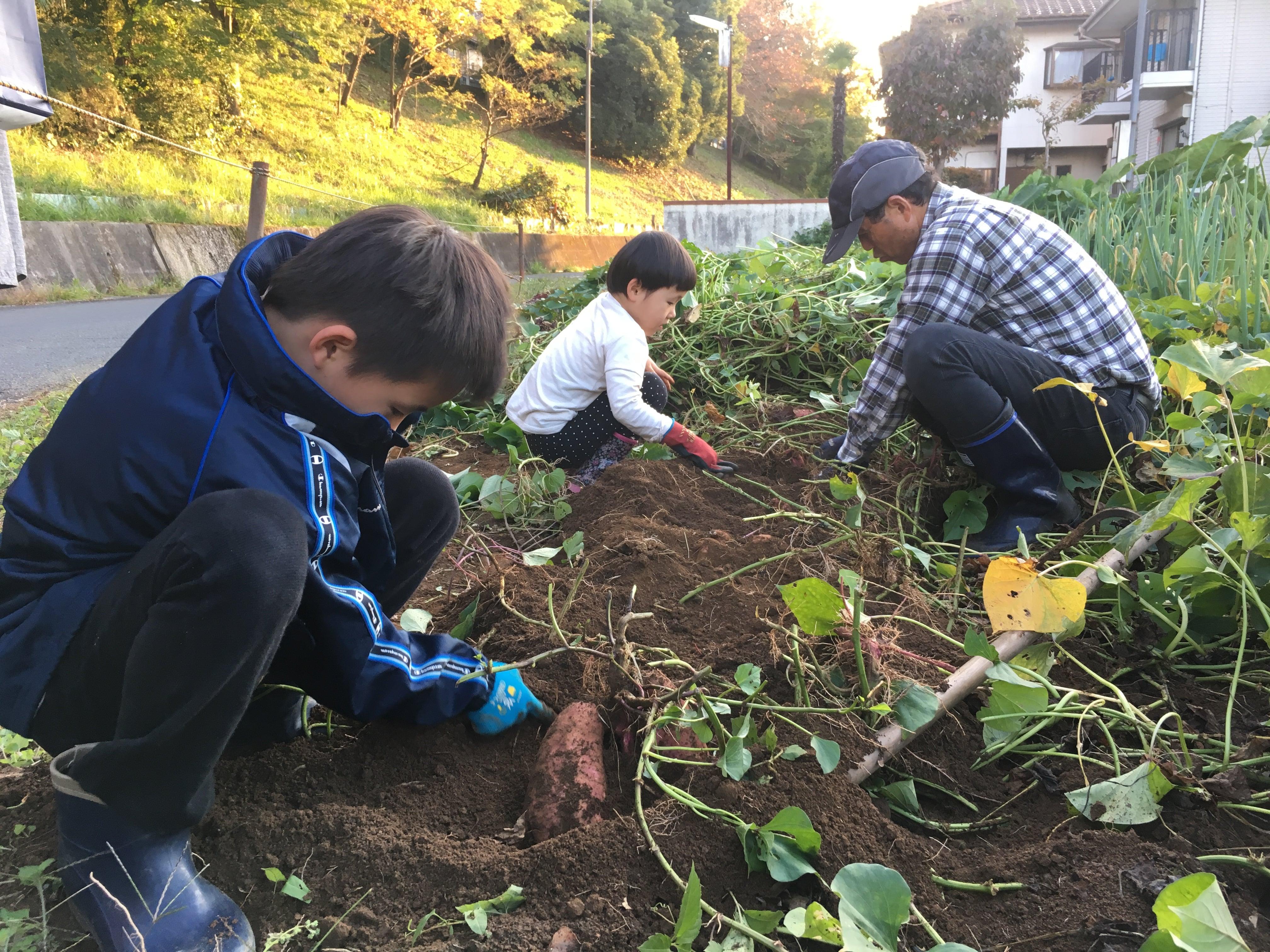 [さいたま]ヤギがきます!無農薬で育てるジャガイモの植付&壷焼き芋を食べ比べる会のイメージその5