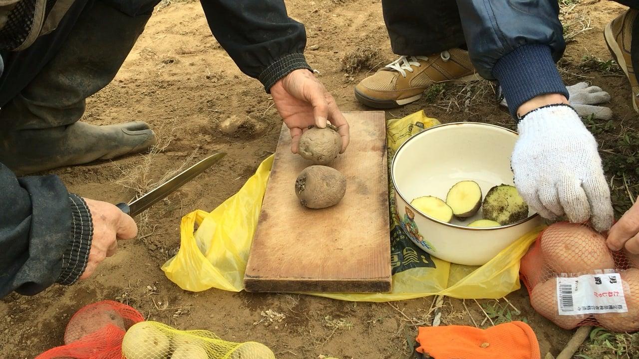 [さいたま]ヤギがきます!無農薬で育てるジャガイモの植付&壷焼き芋を食べ比べる会のイメージその3