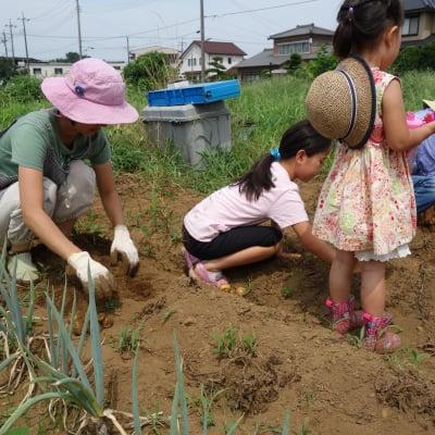 [さいたま市・農業体験]【年会員】無農薬の畑でさつまいもを育てる会