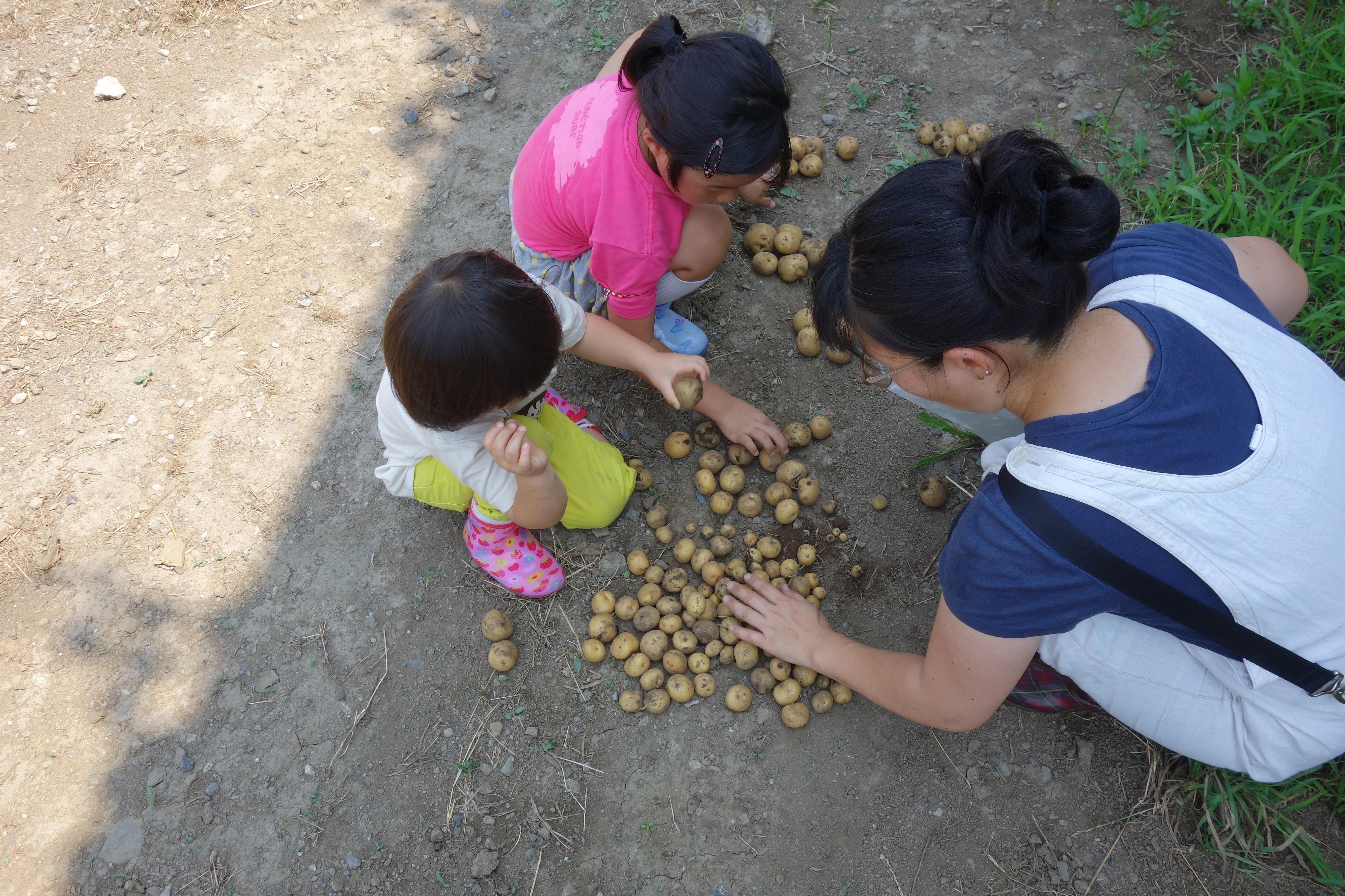 【単発】6/14(日)じゃがいもの収穫祭とさつまいもの植付[さいたま市・農業体験]のイメージその4