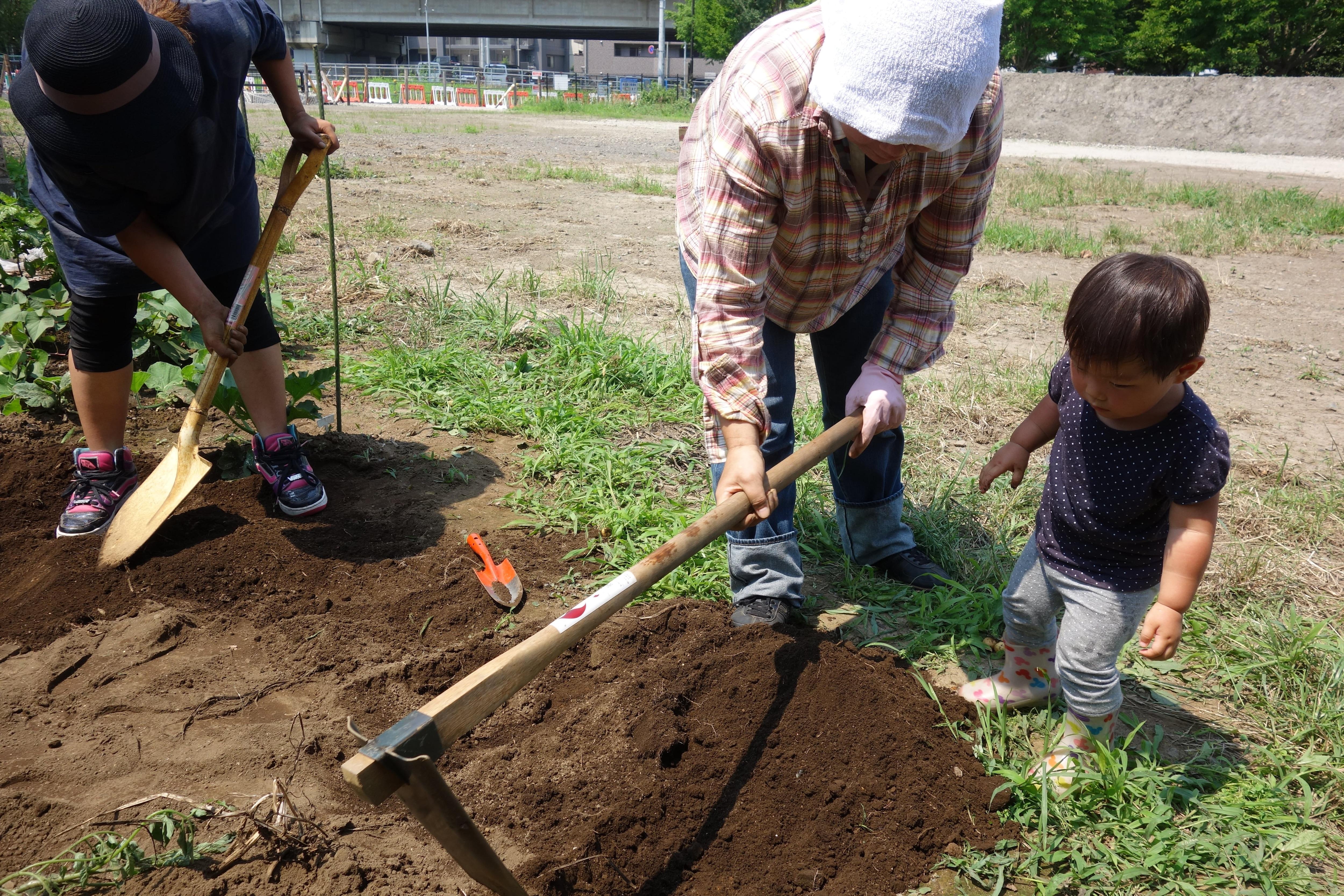 [さいたま市・農業体験]【単発】無農薬のさつまいもの植え付けと焼き芋を食べ比べる会のイメージその2