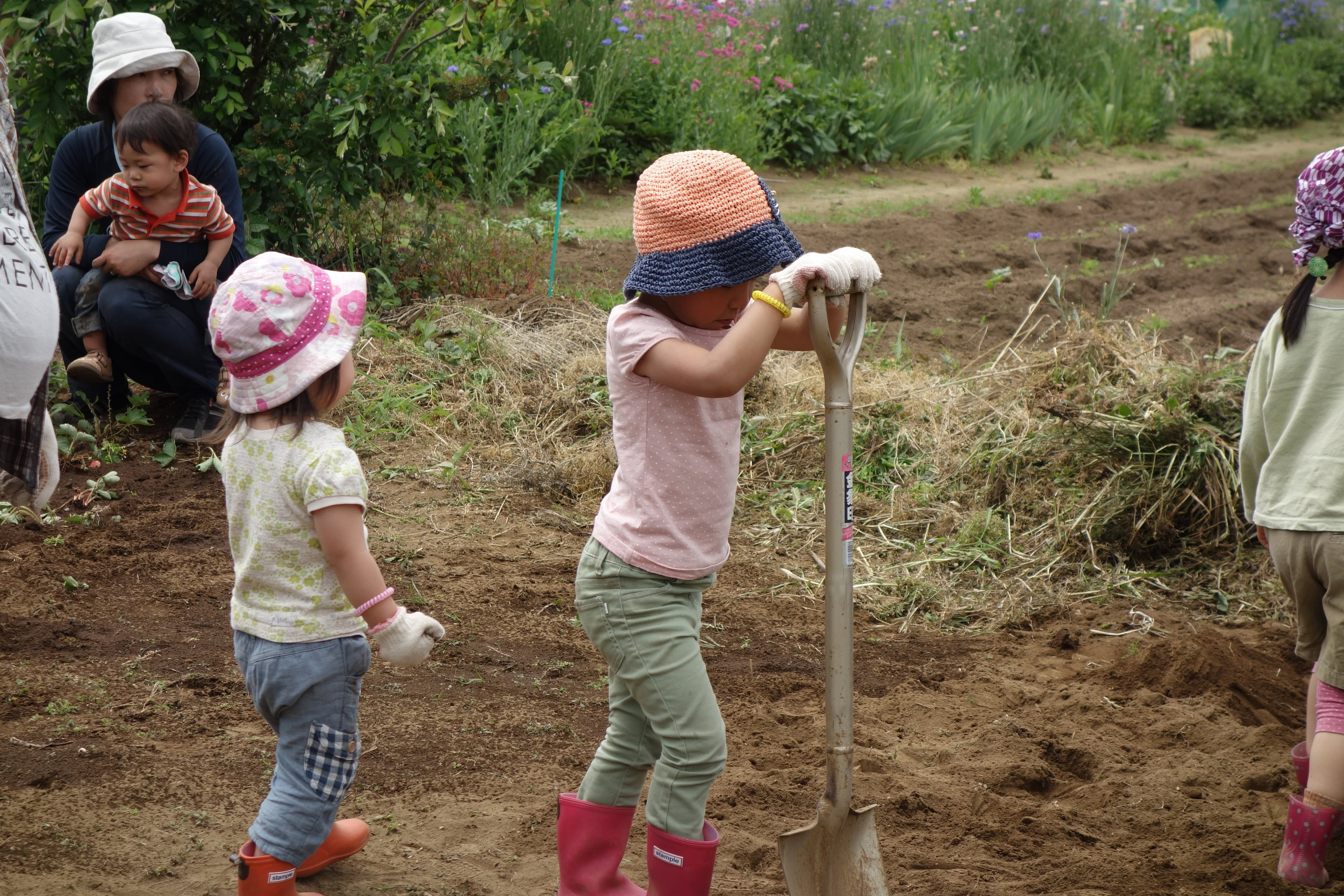 【単発】6/14(日)じゃがいもの収穫祭とさつまいもの植付[さいたま市・農業体験]のイメージその3