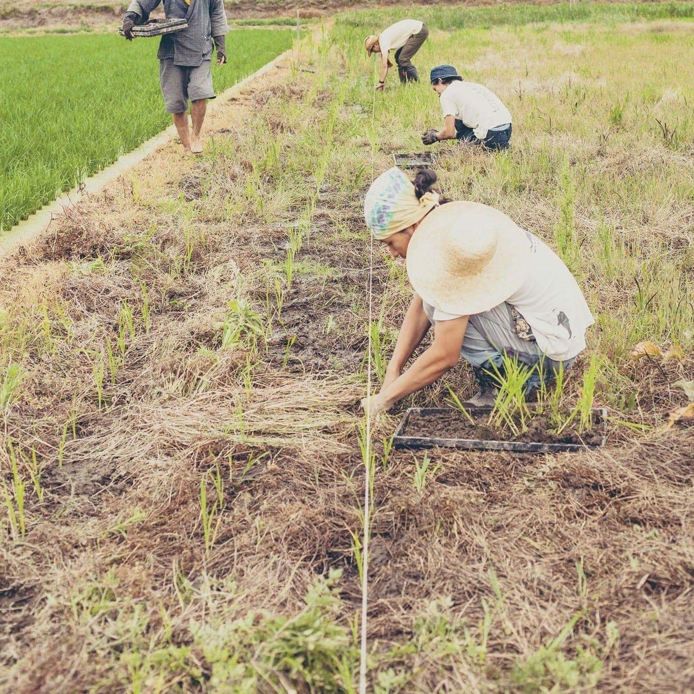 6/24(月)[自然体験・群馬県・子連れOK]不耕起栽培の田植えをしよう!のイメージその2