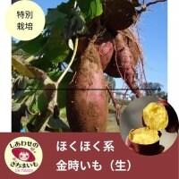 [生]金時いも(香川県産)2キロ