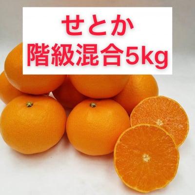 せとか〜秀品階級混合5㎏〜【送料無料】北海道・沖縄別途