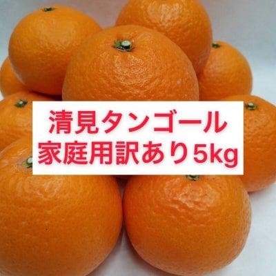 清見タンゴール〜家庭用訳あり5㎏〜【送料無料】北海道・沖縄別途
