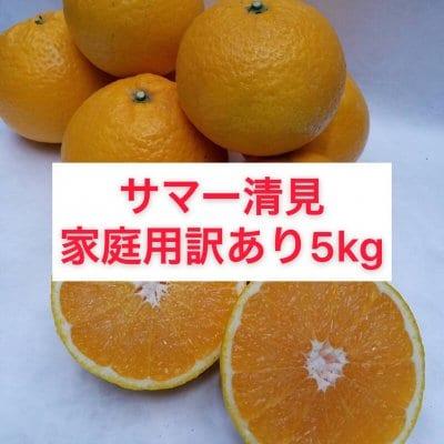 サマー清見〜家庭用訳あり5㎏〜送料無料(北海道・沖縄別途)