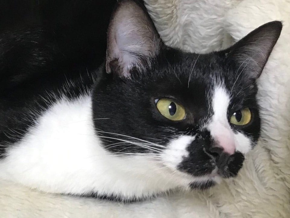 保護猫 心(ここ)ちゃんのスポンサー募集のイメージその2