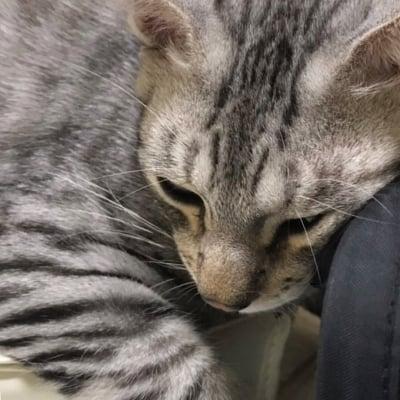 300円保護猫空之助(えあのすけ)くんのスポンサー募集