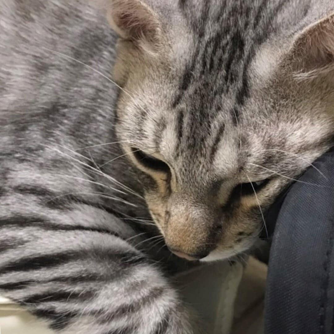 保護猫 空之助(えあのすけ)くんのスポンサー募集のイメージその1