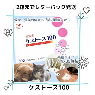 【レターパック2箱まで】高純度ケストース100(腸内環境改善でアレル...