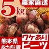 熊本県あさぎり町産 ビーツ5kg 有機栽培(訳あり品) 野菜 在庫販売 予約販売