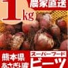 熊本県あさぎり町産 ビーツ 1kg 有機栽培 野菜 栄養 予約販売