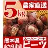 熊本県あさぎり町産 ビーツ 5kg 有機栽培 野菜 栄養 予約販売
