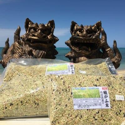 【店頭払い専用】 黄金玄米(くがにまい) 5kg