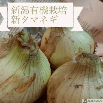 送料無料☆新潟県産有機栽培のあま〜い新たまねぎ5キロ