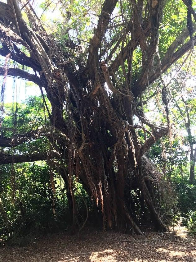 沖縄のパワースポットを見ることは、あなたの未来につながります。のイメージその3