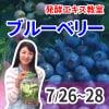グループレッスン8月5日発酵エキス教室「ブルーベリー」無農薬【現地払い】