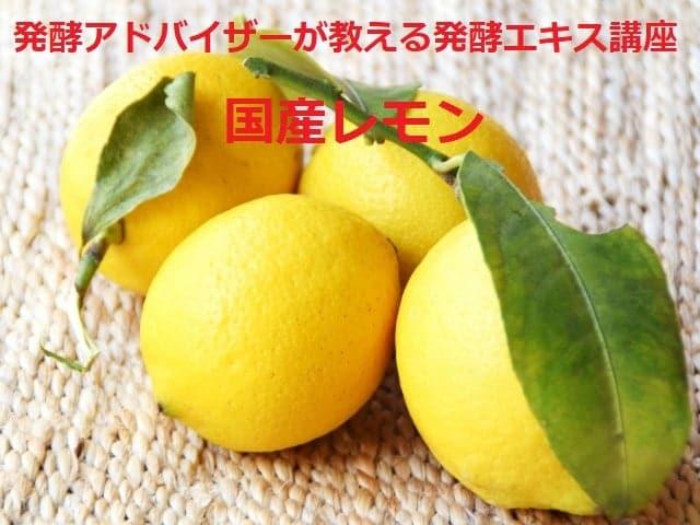 《1月13日(水) 》発酵エキス教室「レモン」【現地払い】のイメージその2