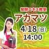 《4月18日(日)午後》発酵エキス教室「アカマツ」【現地払い】