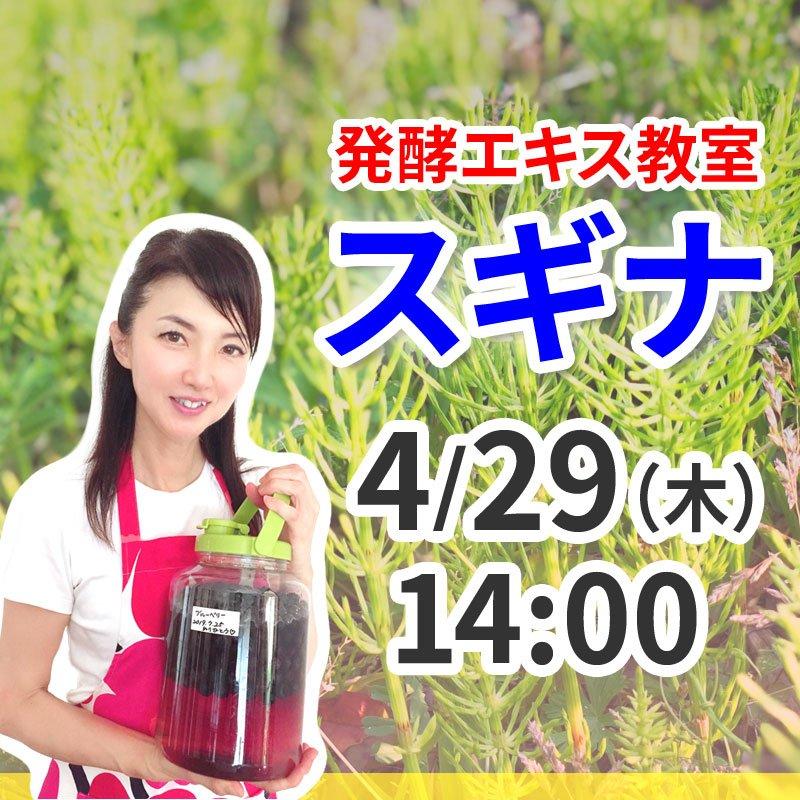 《4月29日(木)午後》発酵エキス教室「驚異の薬草スギナ」【現地払い】のイメージその1