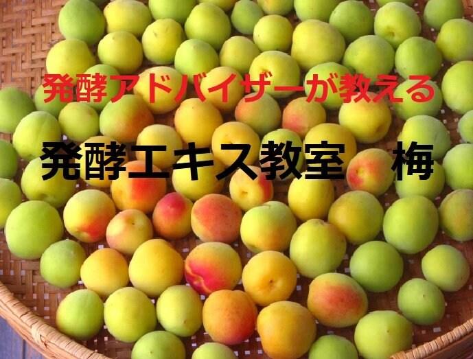 《5月30日(日)午前》発酵エキス教室 梅 (うめ) 【現地払い】のイメージその2
