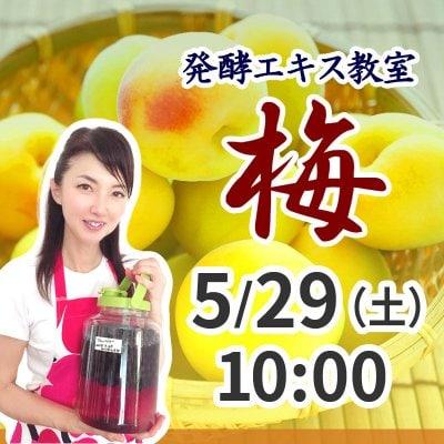 《5月29日(土)午前》発酵エキス教室 梅 (うめ) 【現地払い】