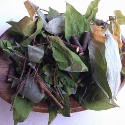 【健康茶】世界遺産 高野山麓のクロモジ 黒文字 2Kg 乾燥 クロモジ茶 クロモジ葉 和ハーブ 和歌山産 (送料無料) 業務用