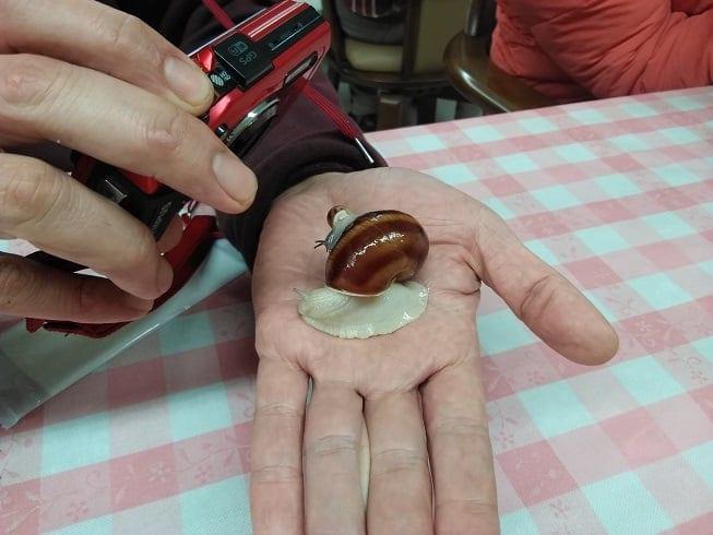 【昆虫食】フェモラータオオモモブトハムシとエスカルゴを食べる会2020 現地払いのみ 三重県松阪市のイメージその4