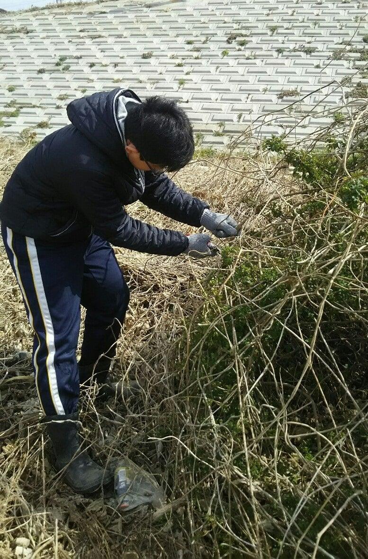 【昆虫食】フェモラータオオモモブトハムシとエスカルゴを食べる会2020 現地払いのみ 三重県松阪市のイメージその2