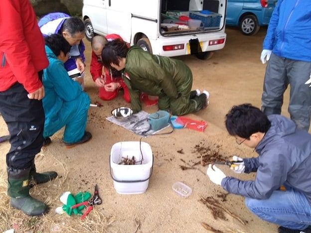 【昆虫食】フェモラータオオモモブトハムシとエスカルゴを食べる会2020 現地払いのみ 三重県松阪市のイメージその1