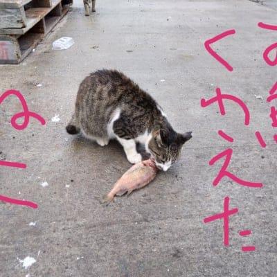 (中止)エソ祭り―そうだ、何でも食べよう。海のいきもの編―@和歌山市 野食倶楽部第18回