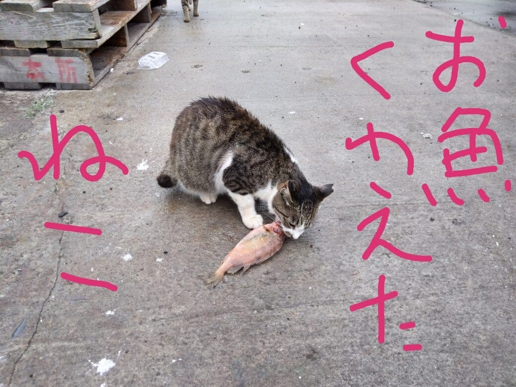 ご当地魚で『魚醤』づくりWS 第一回(漬けタル無し)@和歌山県有田市のイメージその1