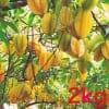 【予約販売】無農薬スターフルーツ2kg