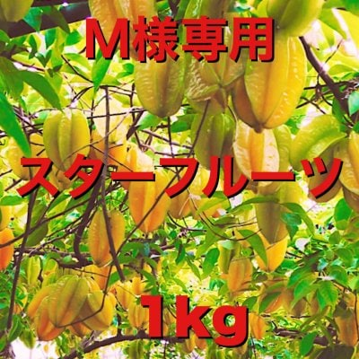 【M様専用】無農薬スターフルーツ1kg