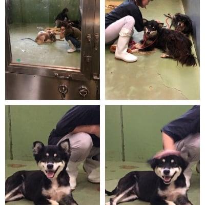 保護団体「まめんち」保護犬猫の定期募金【月会員様】