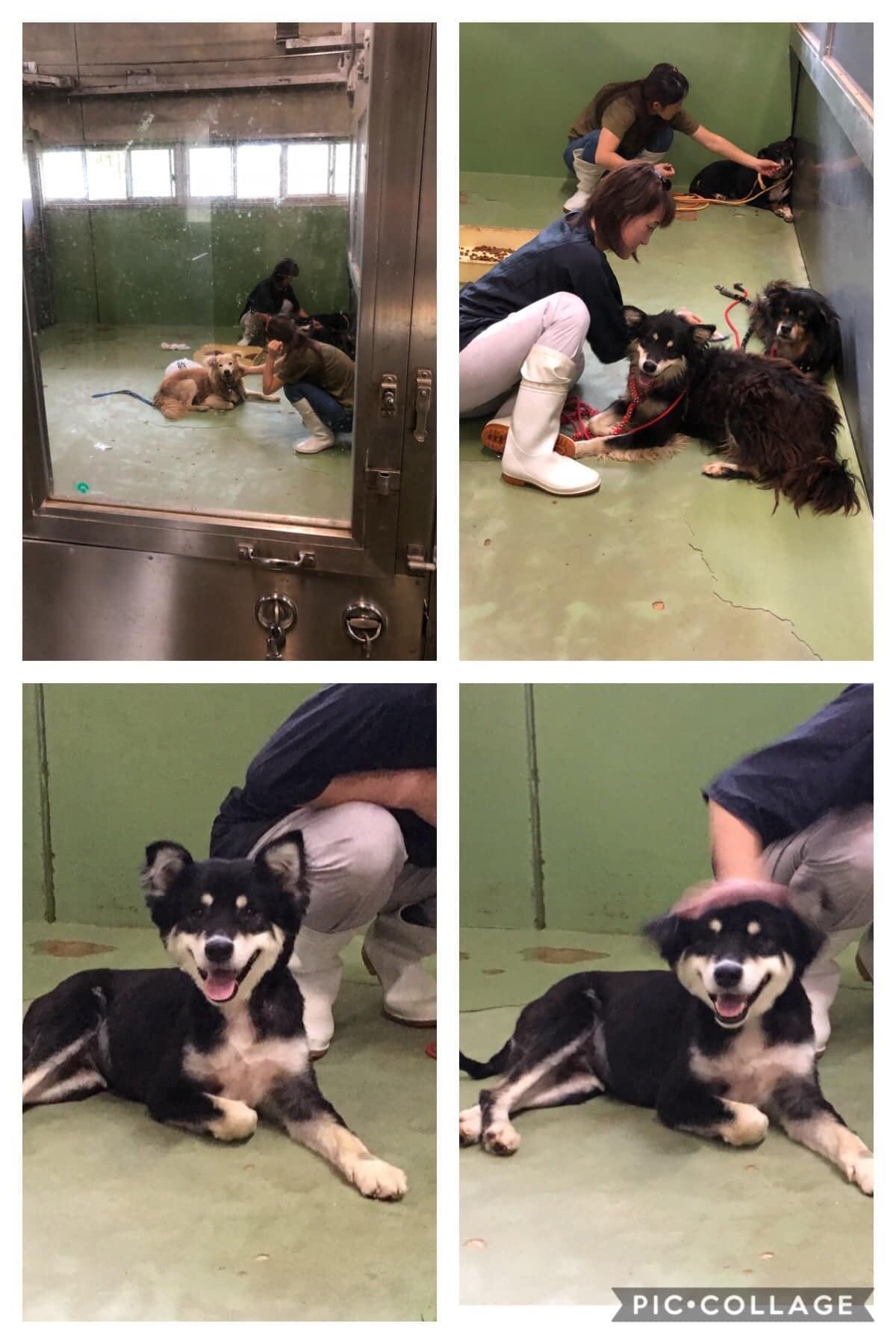 保護団体「まめんち」保護犬猫の定期募金【月会員様】のイメージその1