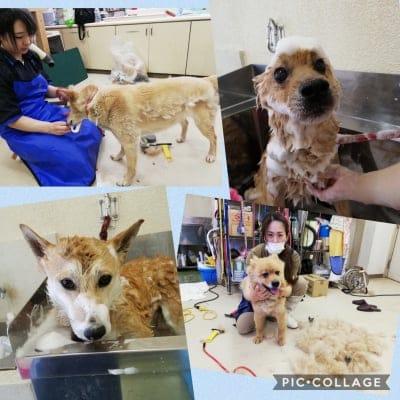 動物保護団体「まめんち」保護犬猫の定期募金【月会員様】