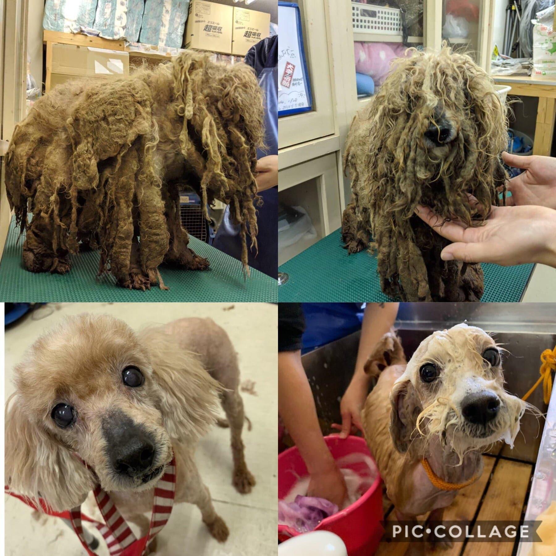 動物保護団体「まめんち」保護犬猫の募金【定期ではありません。】のイメージその1