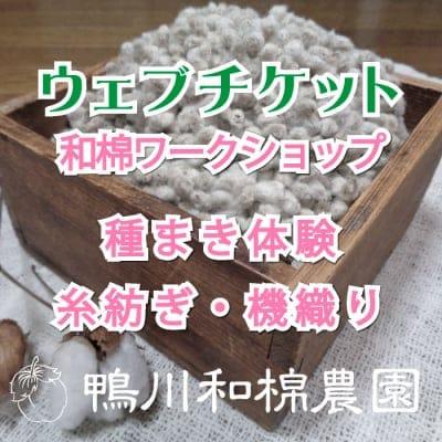【5月11日(土)】和棉ワークショップ 種まき体験・糸紡ぎ・機織り