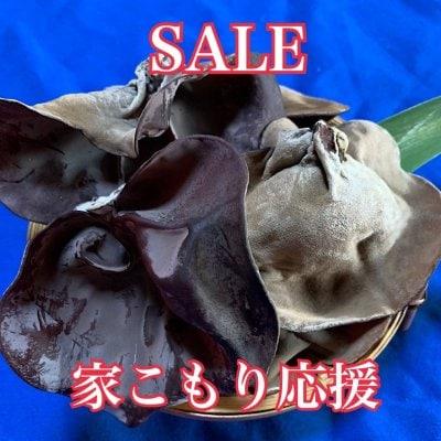 [家こもり応援価格 SALE]肉厚ぷりぷり 熊本県産 生きくらげ 500g