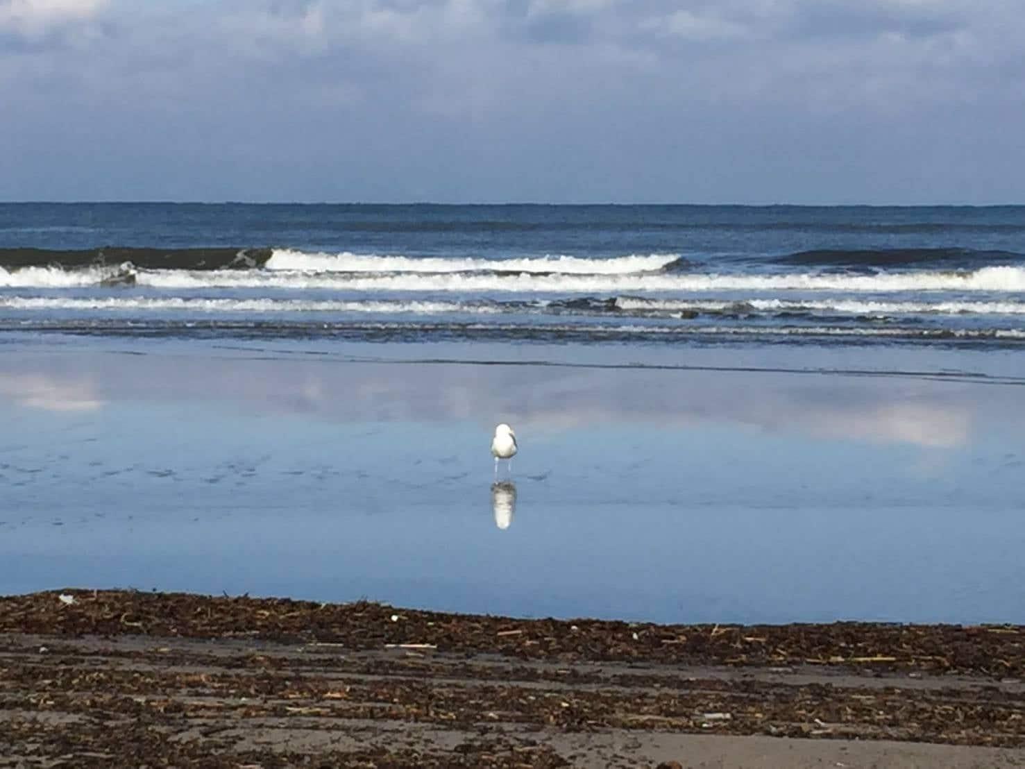 タープの下【手ぶらハンモックカフェ3時間】手ぶらで♪浜でハンモックおひとり様カフェのイメージその1
