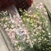 お花を飾ろう❣️コロナによる自粛余波‼️花屋、市場、農家HELP‼️