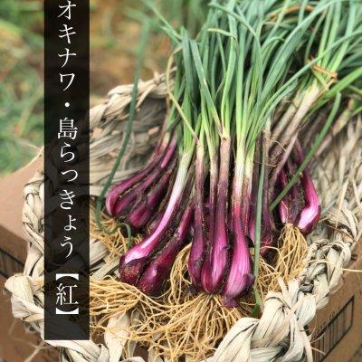 農家さん応援!沖縄県産土付き島らっきょう|1㎏(白500g・紅500g)