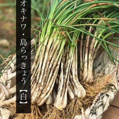 【1kg】沖縄県産土付き島らっきょう