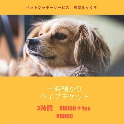 一時預かり(ペットシッター)犬 猫 3時間/兵庫県芦屋市近郊
