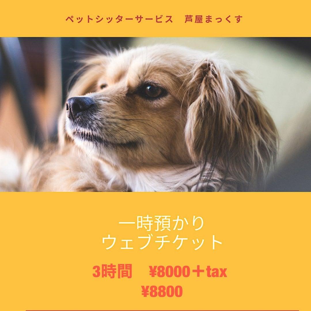 一時預かり(ペットシッター)犬 猫 3時間/兵庫県芦屋市近郊のイメージその1