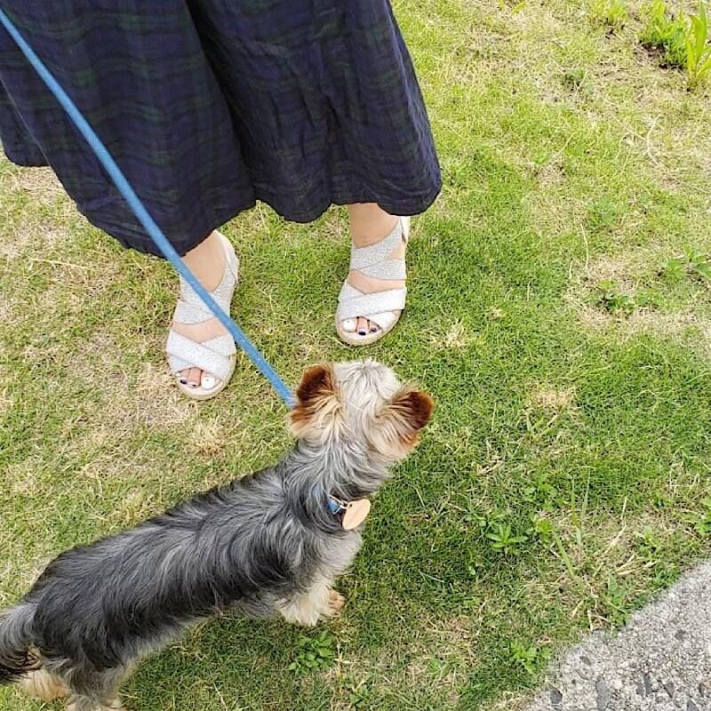 お散歩代行(犬)30分/兵庫県芦屋市近郊のイメージその2