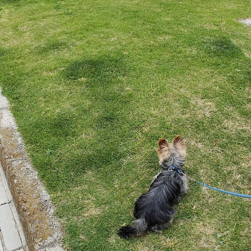 お散歩代行(犬)30分/兵庫県芦屋市近郊のイメージその3